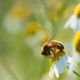 National Biodiversity Week 15th-23rd May